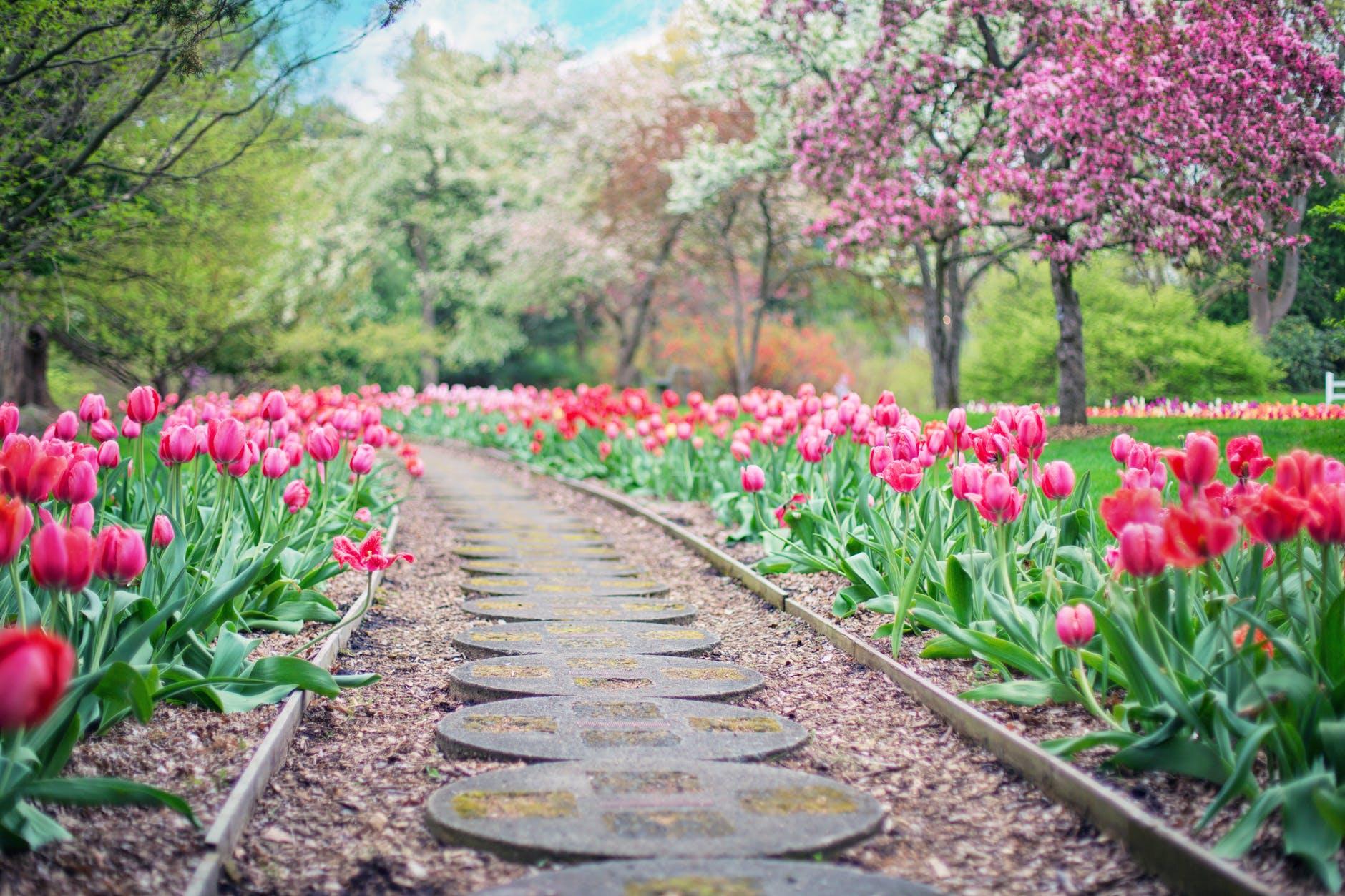 Flowering Shrubs for each Month (TALK)